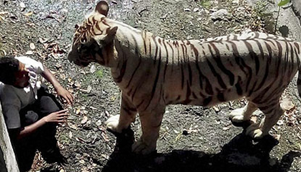 Death in New Delhi Zoo. Who's responsible – Tiger or Human?