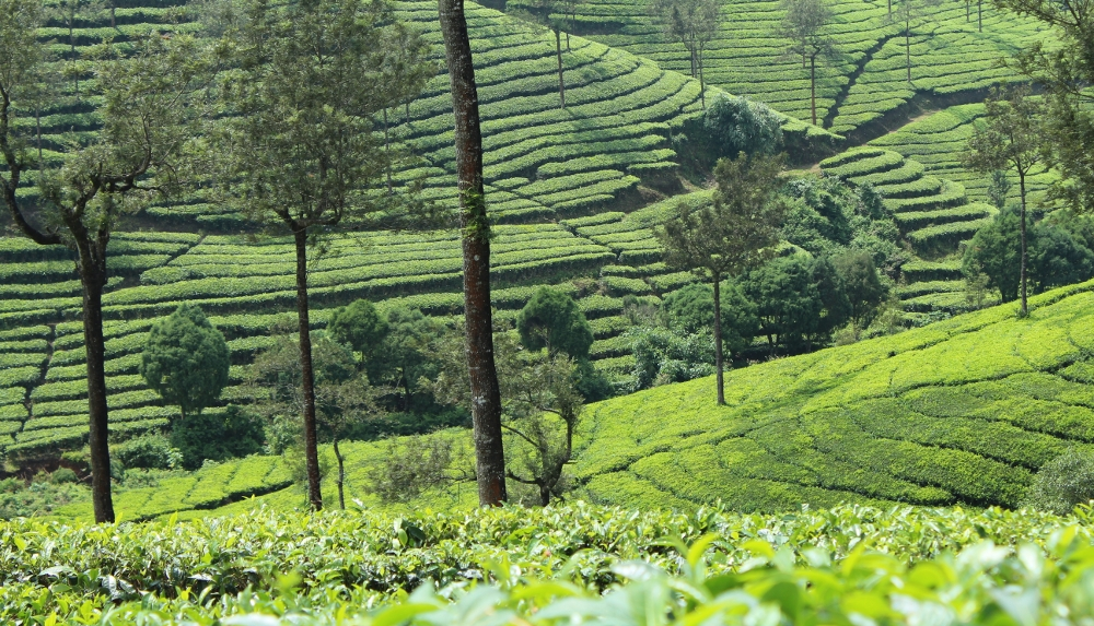 Kerala, God's Own Country – 4